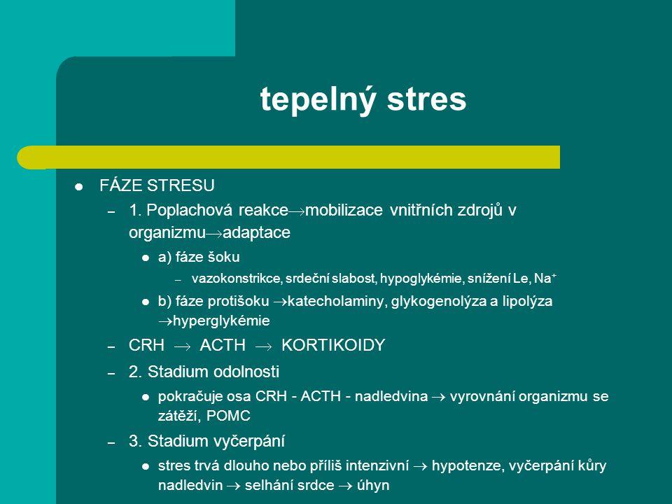 tepelný stres FÁZE STRESU