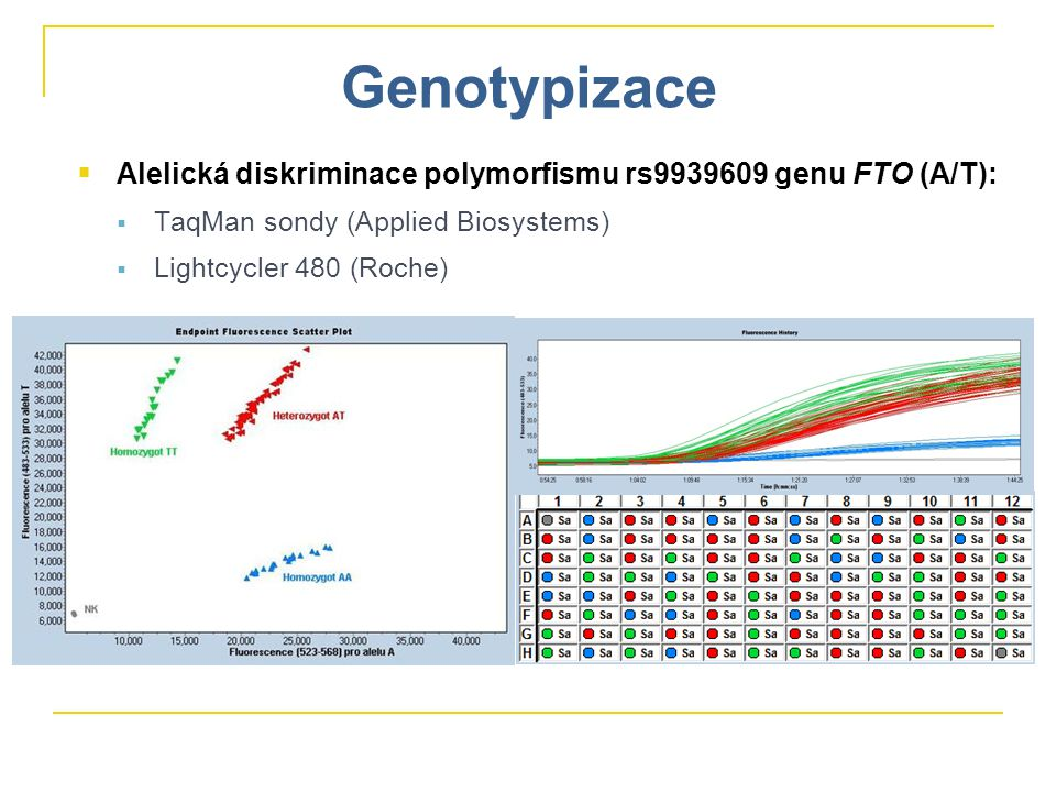 Genotypizace Alelická diskriminace polymorfismu rs9939609 genu FTO (A/T): TaqMan sondy (Applied Biosystems)