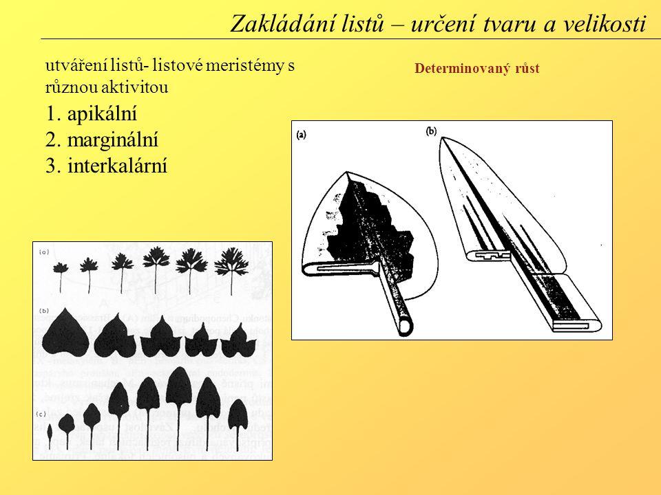 Zakládání listů – určení tvaru a velikosti
