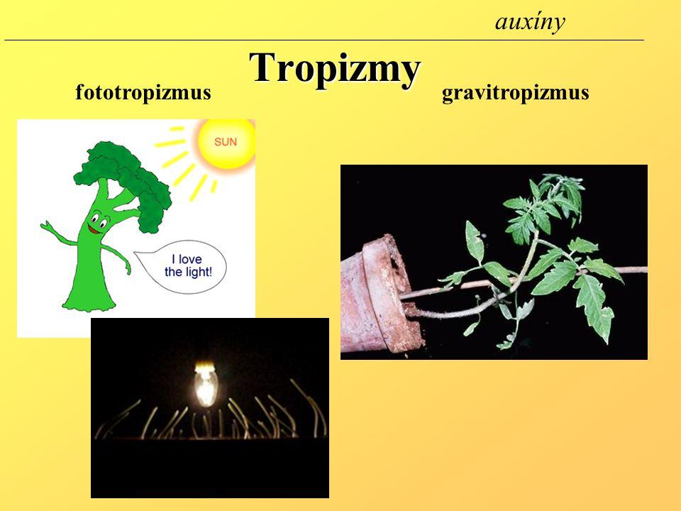 auxíny Tropizmy fototropizmus gravitropizmus