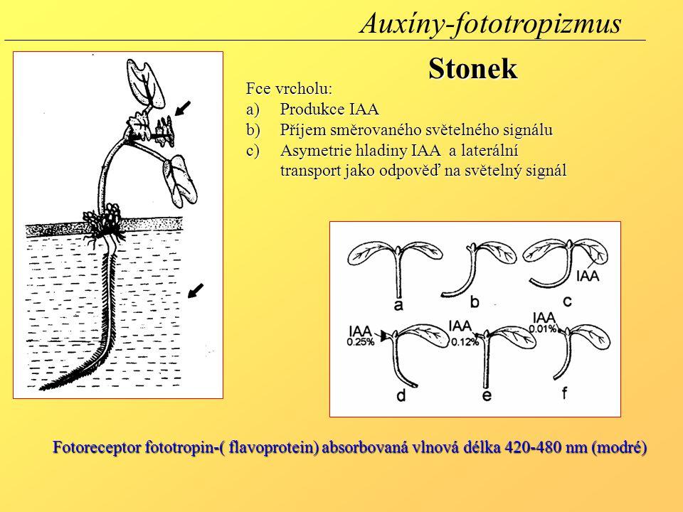 Auxíny-fototropizmus