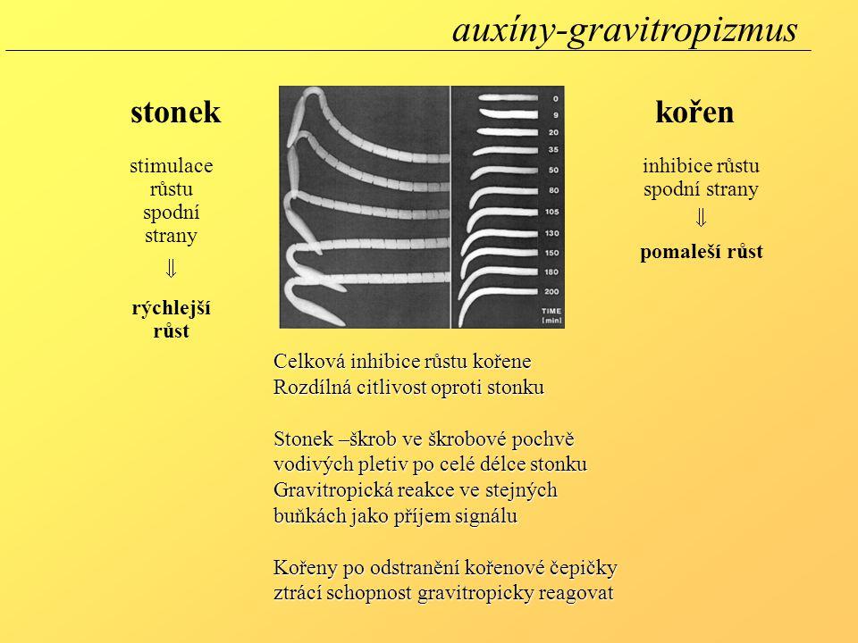 auxíny-gravitropizmus