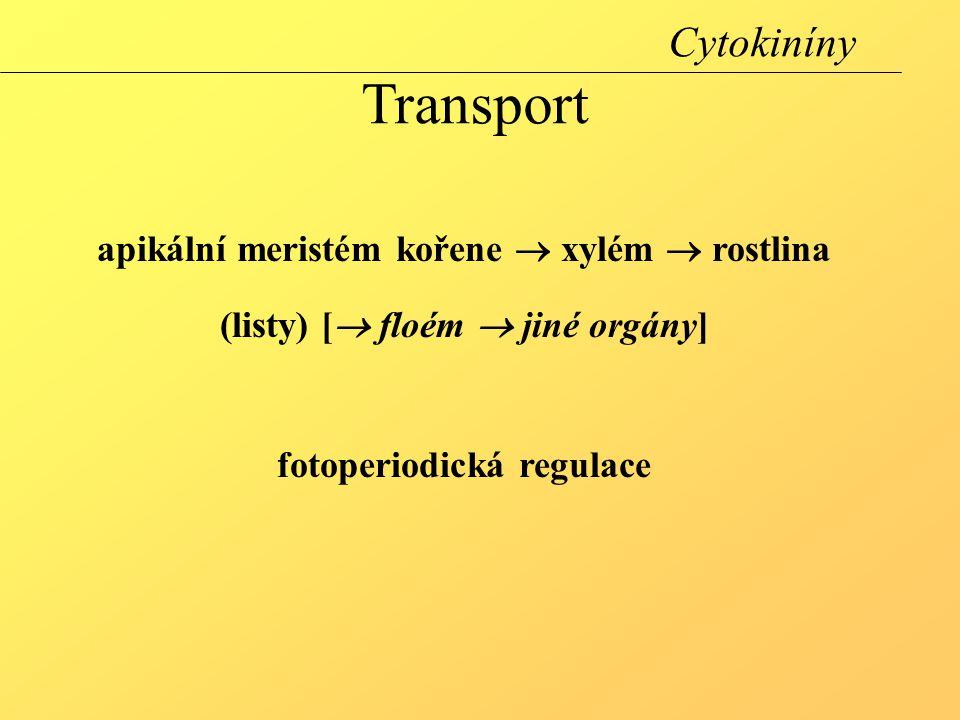 Cytokiníny Transport apikální meristém kořene  xylém  rostlina