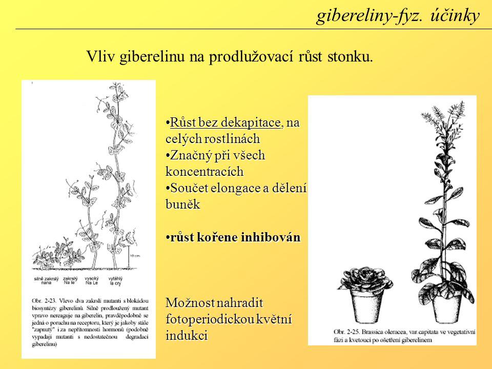 Vliv giberelinu na prodlužovací růst stonku.