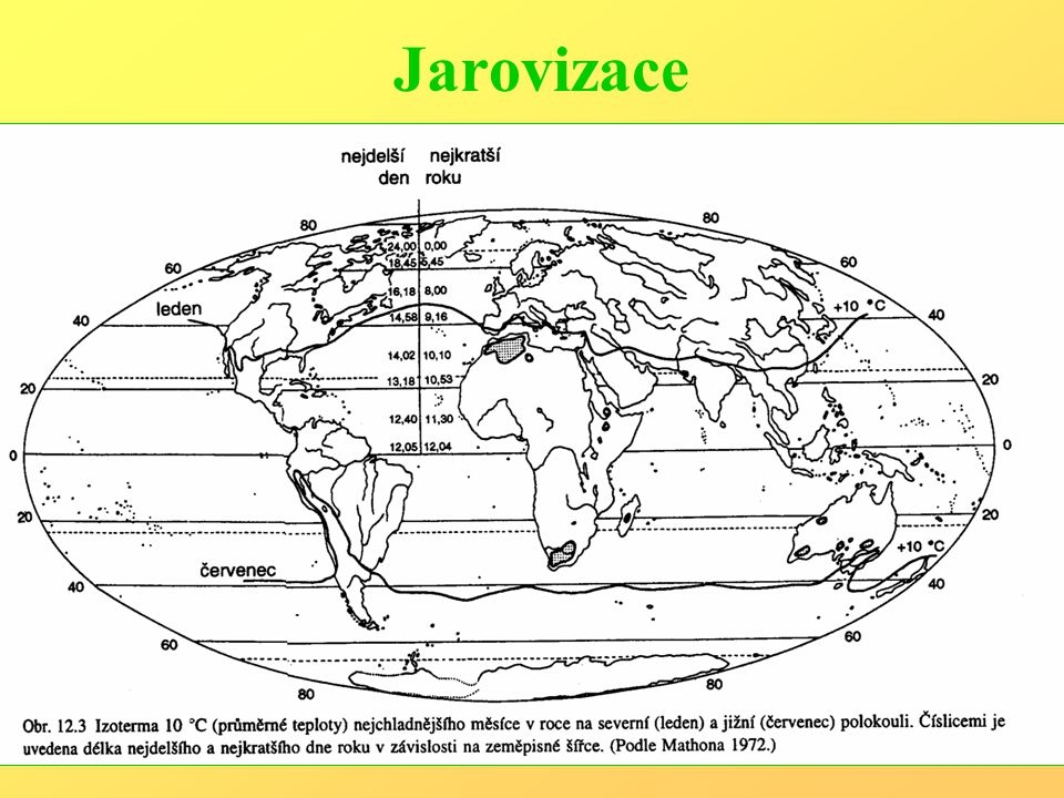 Jarovizace