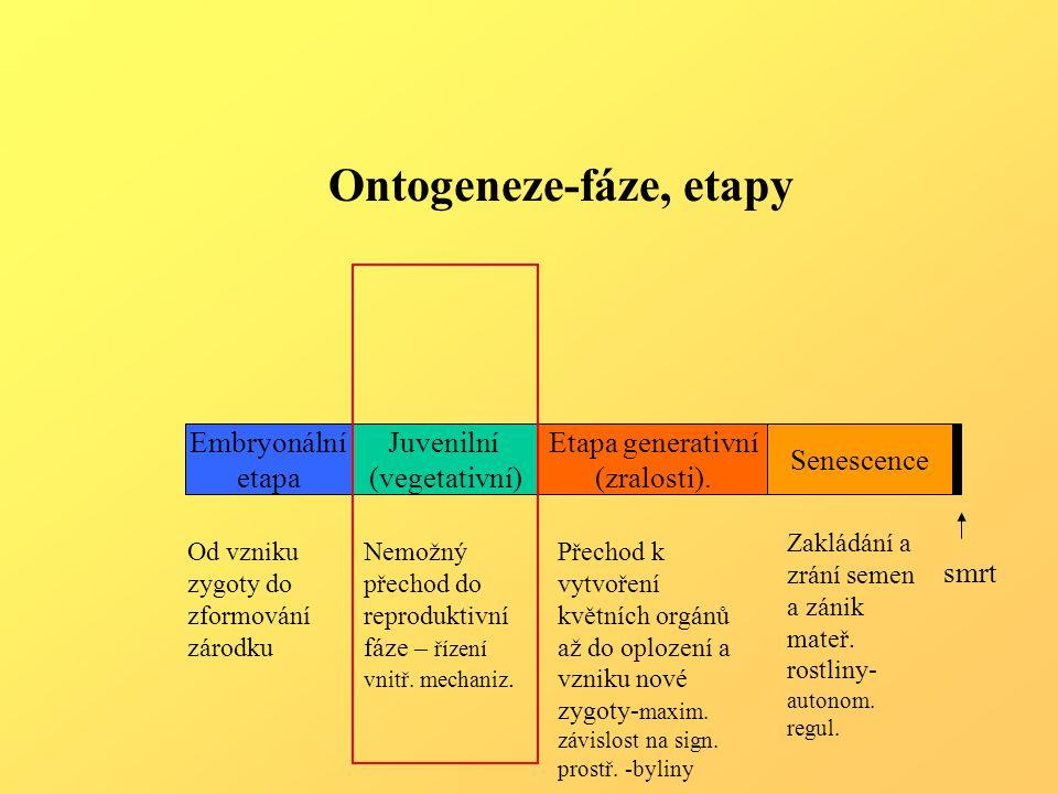 Ontogeneze-fáze, etapy