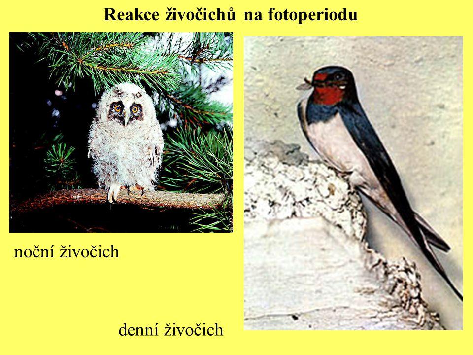 Reakce živočichů na fotoperiodu