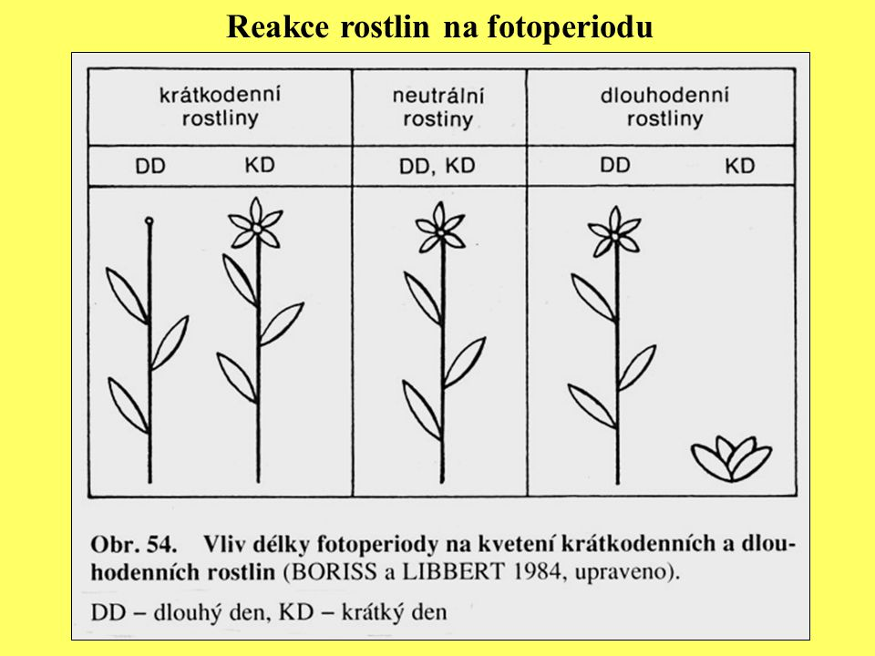 Reakce rostlin na fotoperiodu