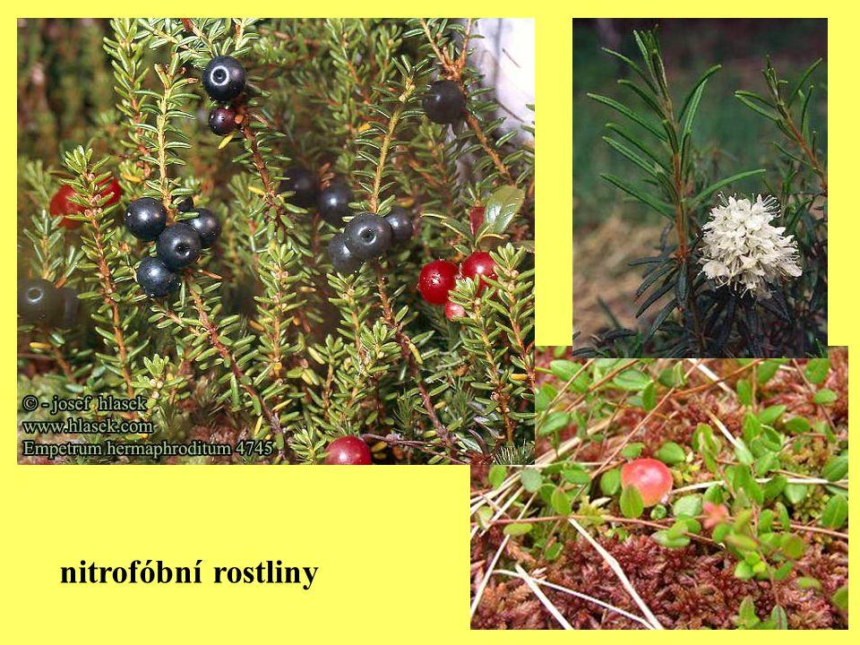 nitrofóbní rostliny