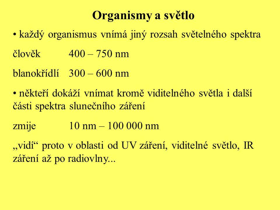 Organismy a světlo každý organismus vnímá jiný rozsah světelného spektra. člověk 400 – 750 nm. blanokřídlí 300 – 600 nm.