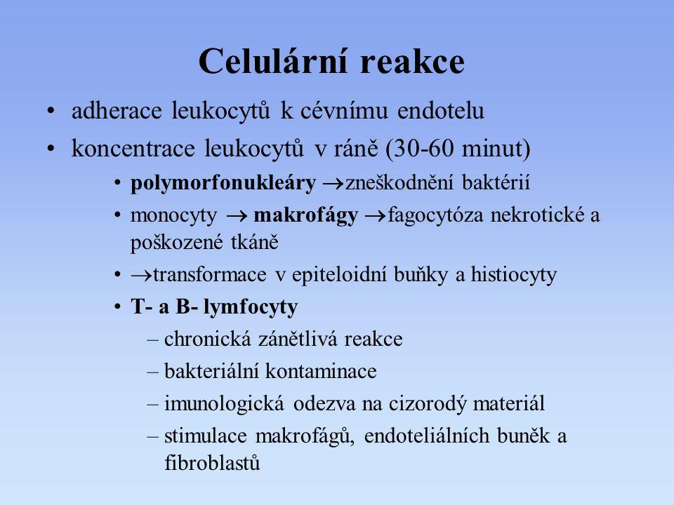 Celulární reakce adherace leukocytů k cévnímu endotelu