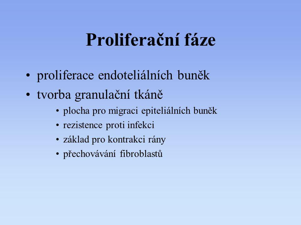 Proliferační fáze proliferace endoteliálních buněk