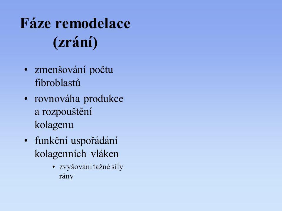 Fáze remodelace (zrání)