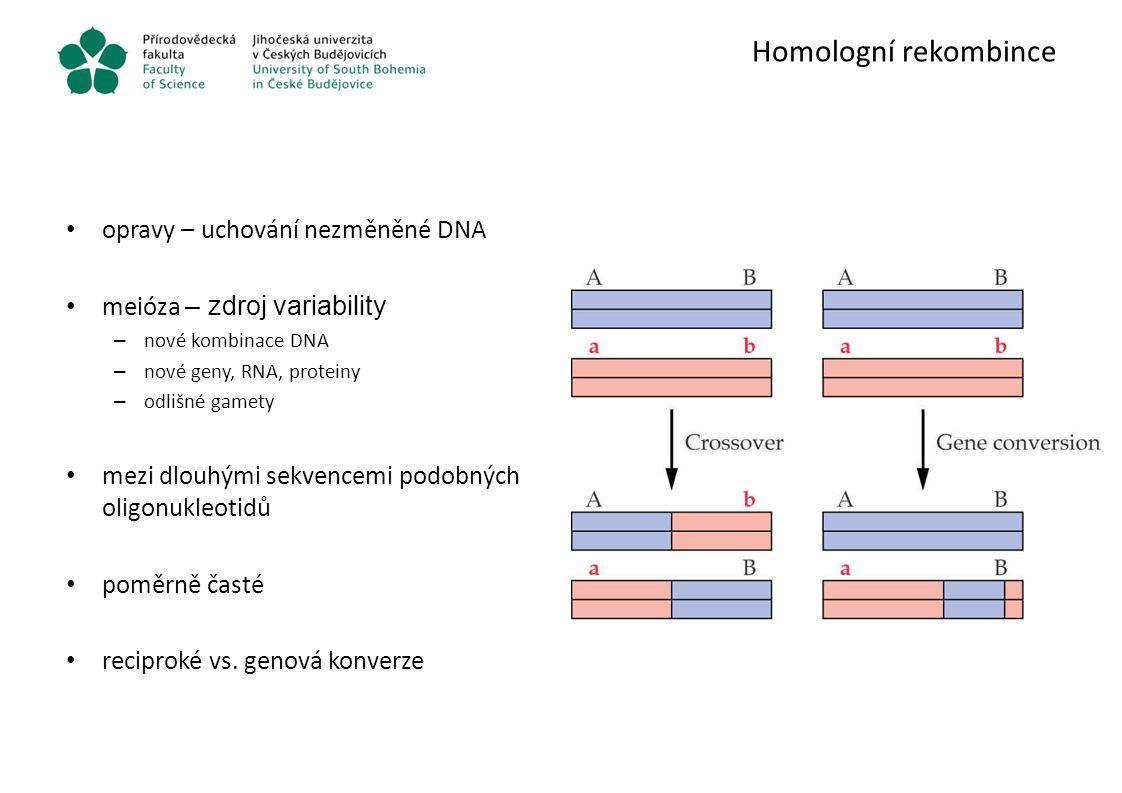 Homologní rekombince opravy – uchování nezměněné DNA
