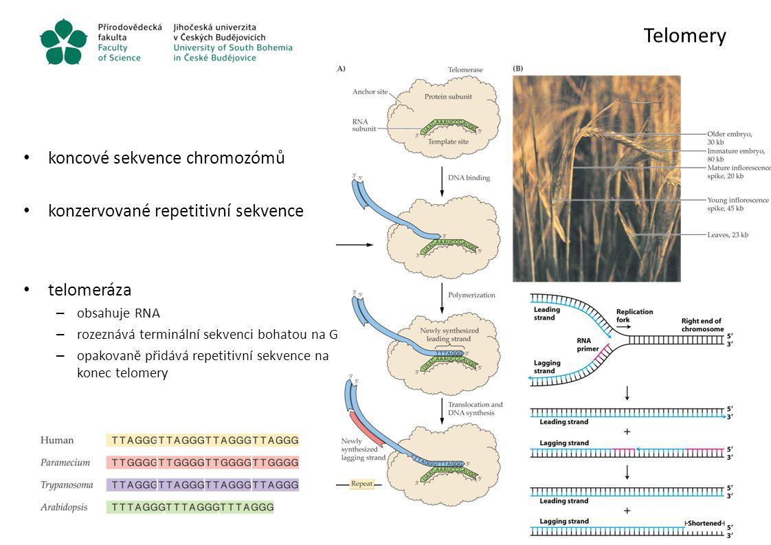 Telomery koncové sekvence chromozómů konzervované repetitivní sekvence