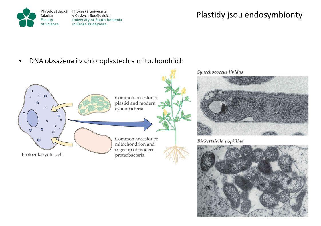 Plastidy jsou endosymbionty