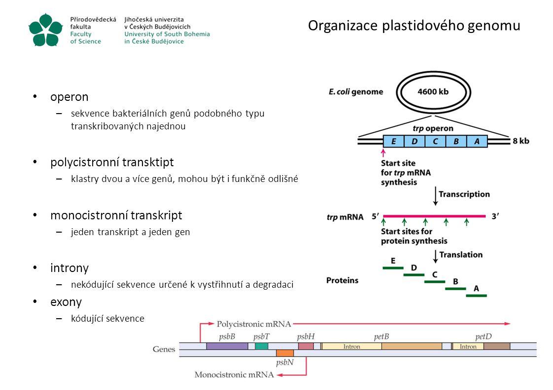 Organizace plastidového genomu
