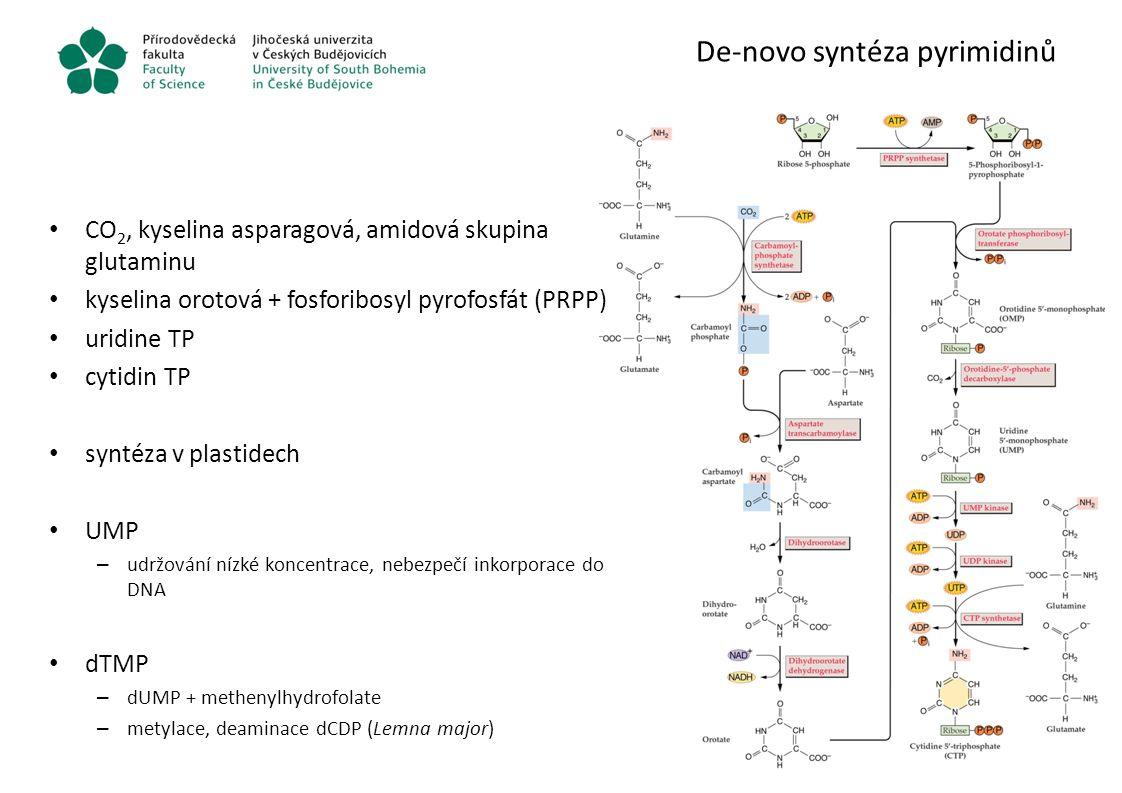 De-novo syntéza pyrimidinů