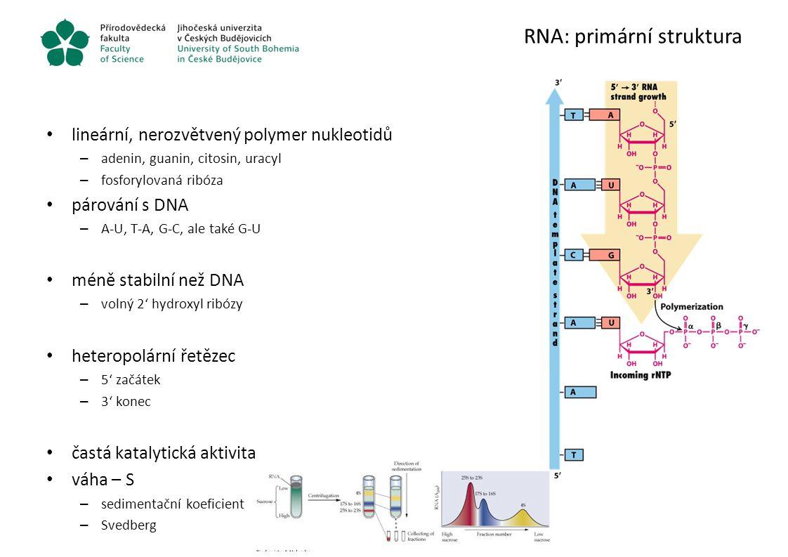 RNA: primární struktura