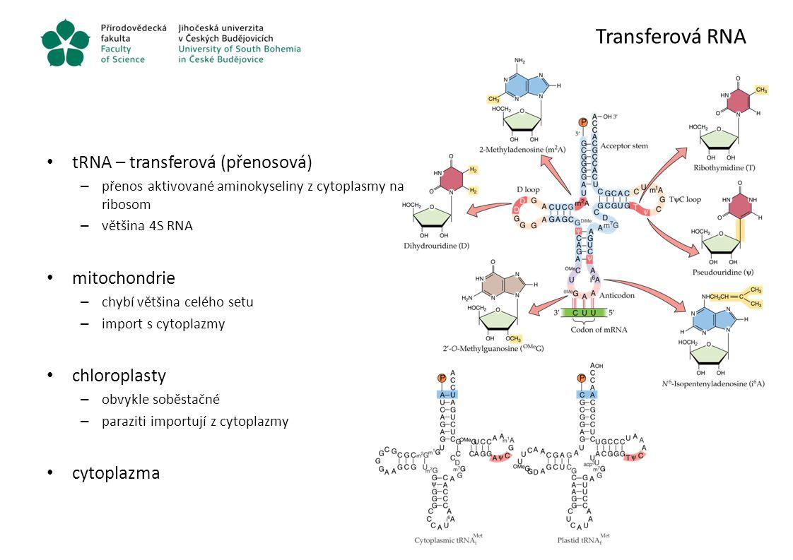 Transferová RNA tRNA – transferová (přenosová) mitochondrie