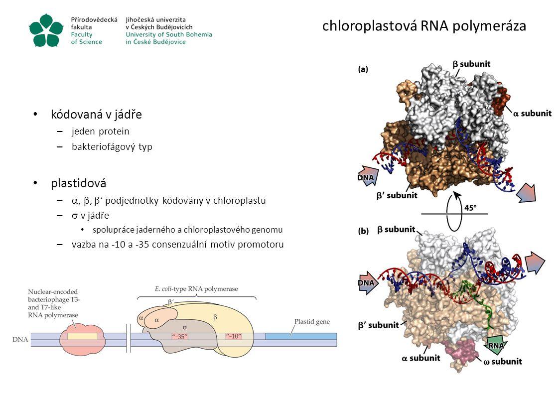 chloroplastová RNA polymeráza