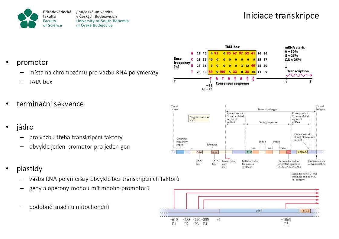 Iniciace transkripce promotor terminační sekvence jádro plastidy