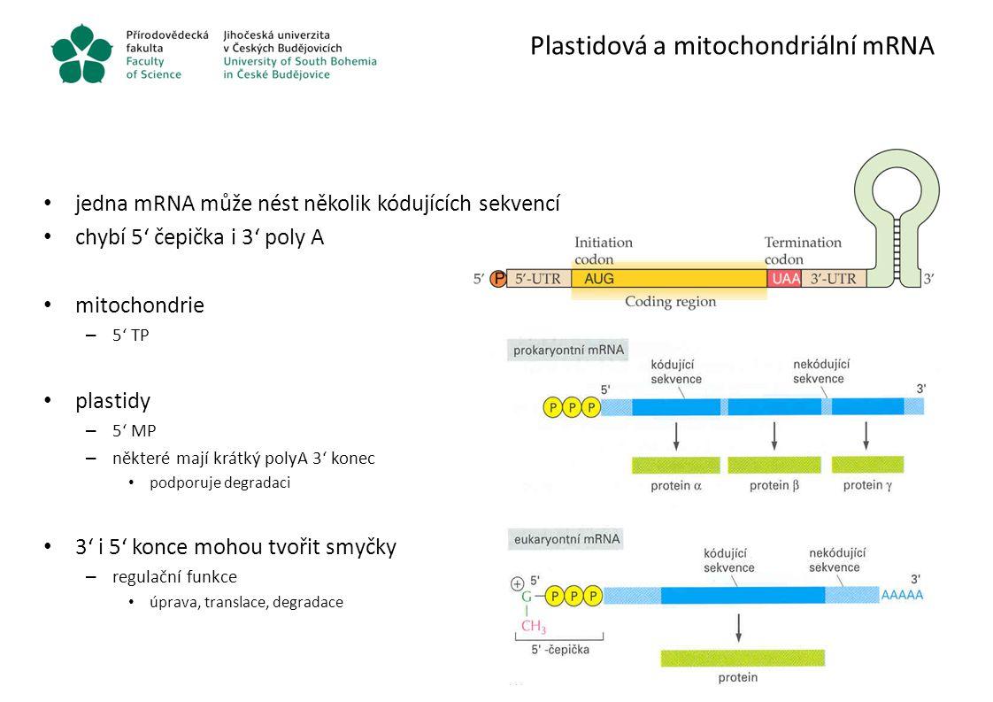 Plastidová a mitochondriální mRNA