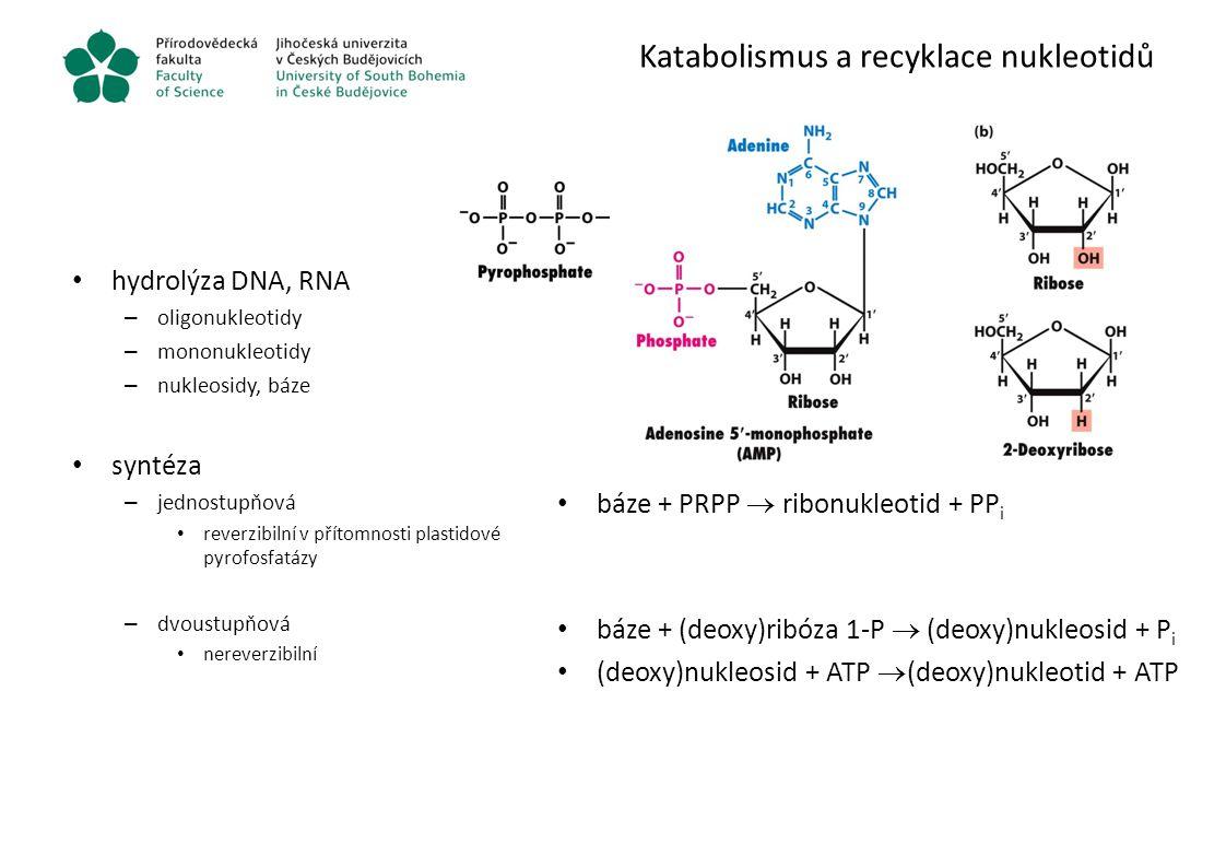 Katabolismus a recyklace nukleotidů