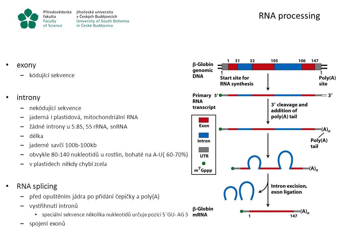RNA processing exony introny RNA splicing kódující sekvence
