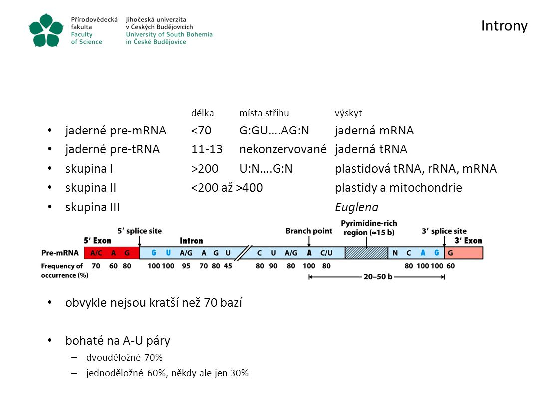 Introny jaderné pre-mRNA <70 G:GU….AG:N jaderná mRNA