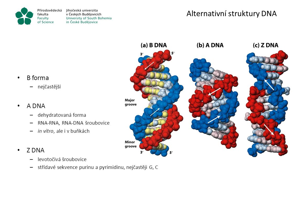 Alternativní struktury DNA