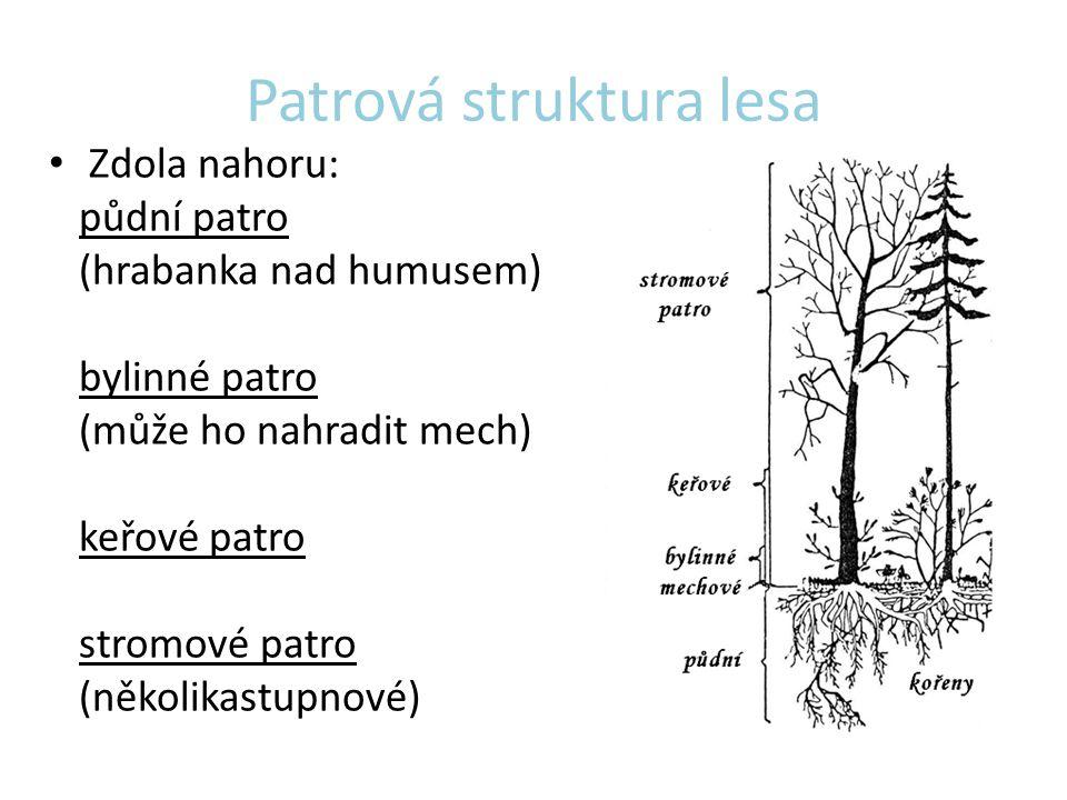 Patrová struktura lesa