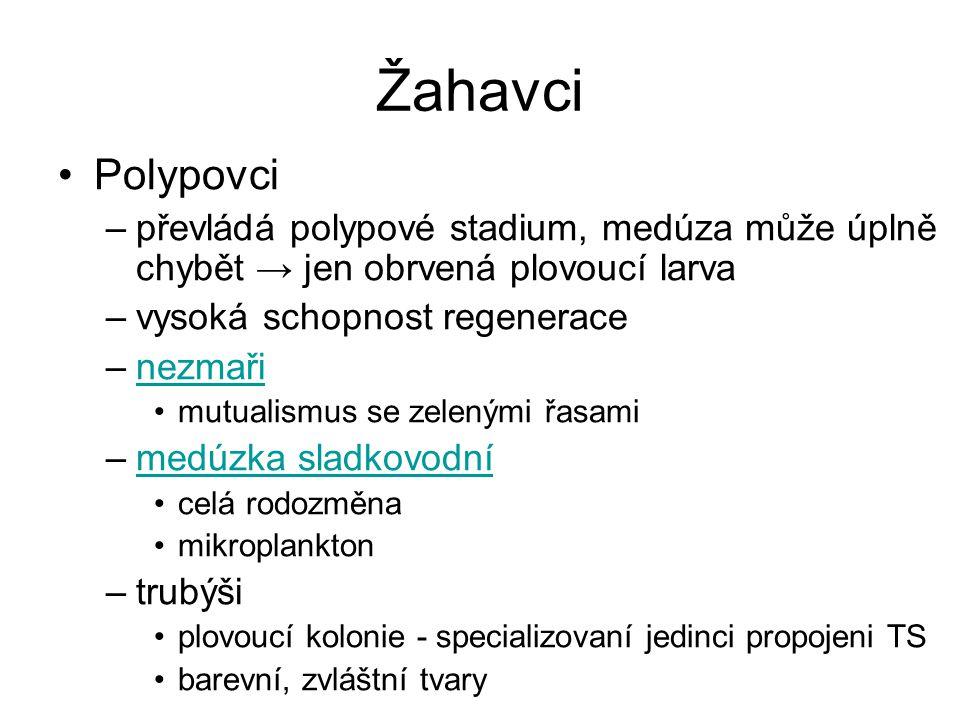 Žahavci Polypovci. převládá polypové stadium, medúza může úplně chybět → jen obrvená plovoucí larva.