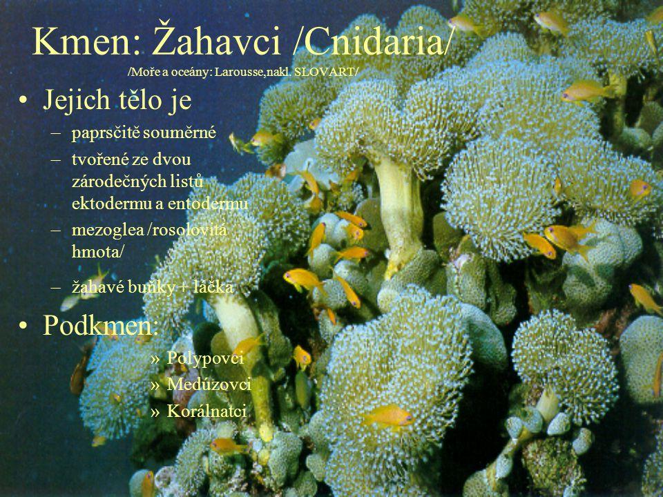 Kmen: Žahavci /Cnidaria/ /Moře a oceány: Larousse,nakl. SLOVART/