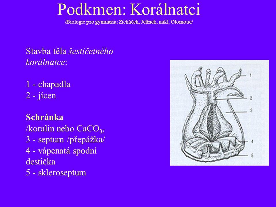 Podkmen: Korálnatci /Biologie pro gymnázia: Zicháček, Jelínek, nakl