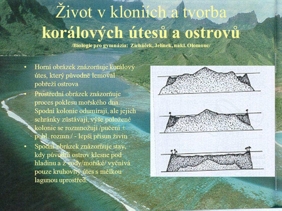 Život v kloniích a tvorba korálových útesů a ostrovů /Biologie pro gymnázia: Zicháček, Jelínek, nakl. Olomouc/