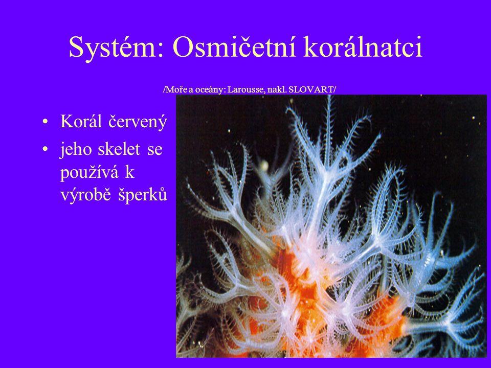 Systém: Osmičetní korálnatci /Moře a oceány: Larousse, nakl. SLOVART/