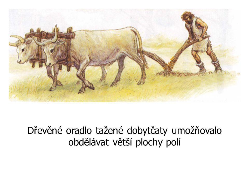 Dřevěné oradlo tažené dobytčaty umožňovalo obdělávat větší plochy polí
