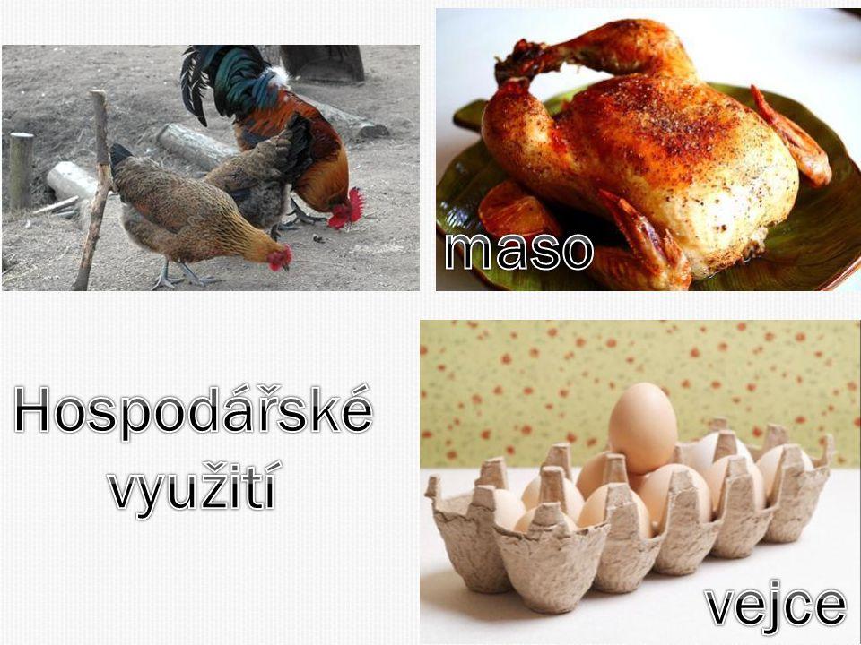 maso vejce Hospodářské využití