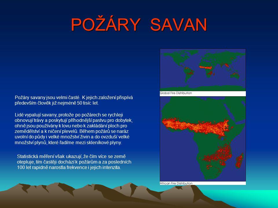 POŽÁRY SAVAN Požáry savany jsou velmi časté. K jejich založení přispívá především člověk již nejméně 50 tisíc let.