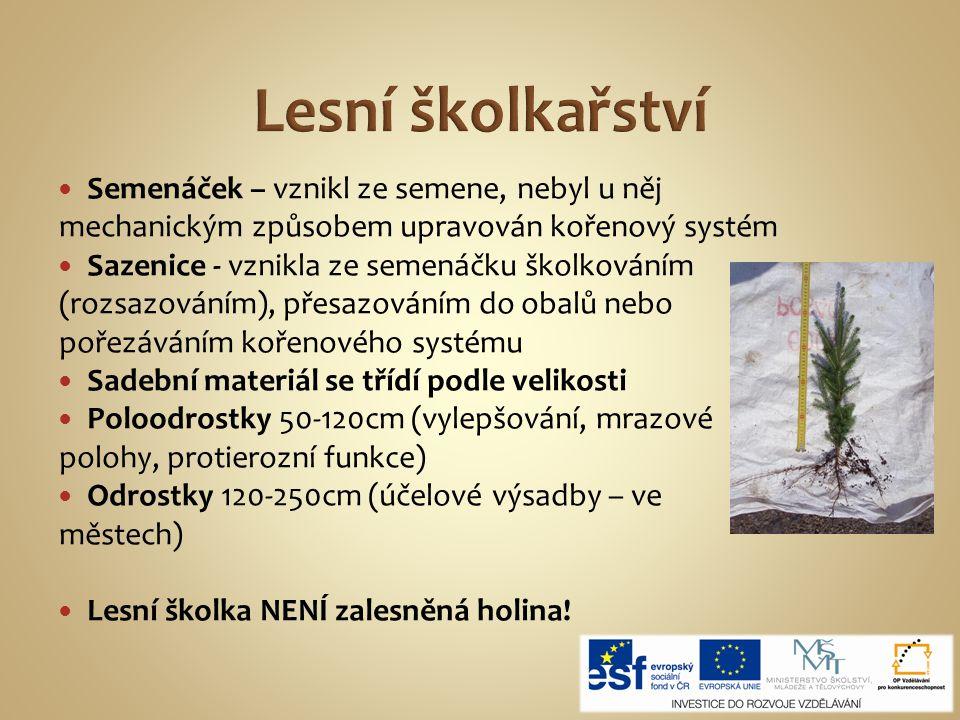 Lesní školkařství Semenáček – vznikl ze semene, nebyl u něj mechanickým způsobem upravován kořenový systém.
