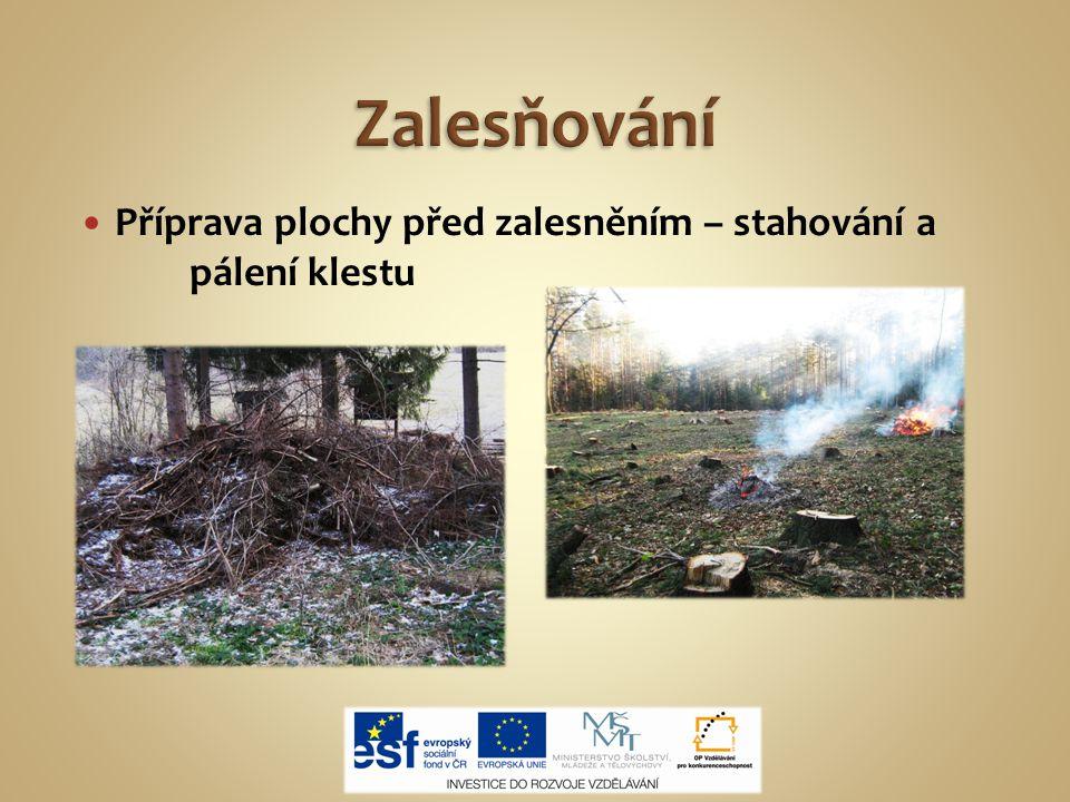 Zalesňování Příprava plochy před zalesněním – stahování a pálení klestu