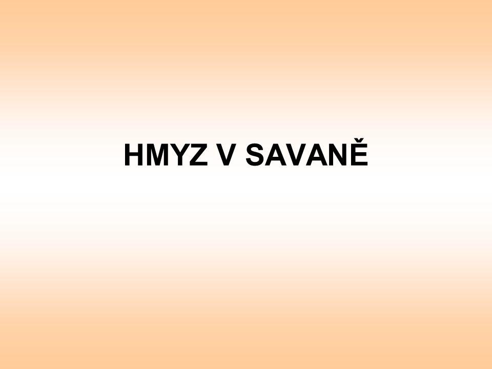HMYZ V SAVANĚ