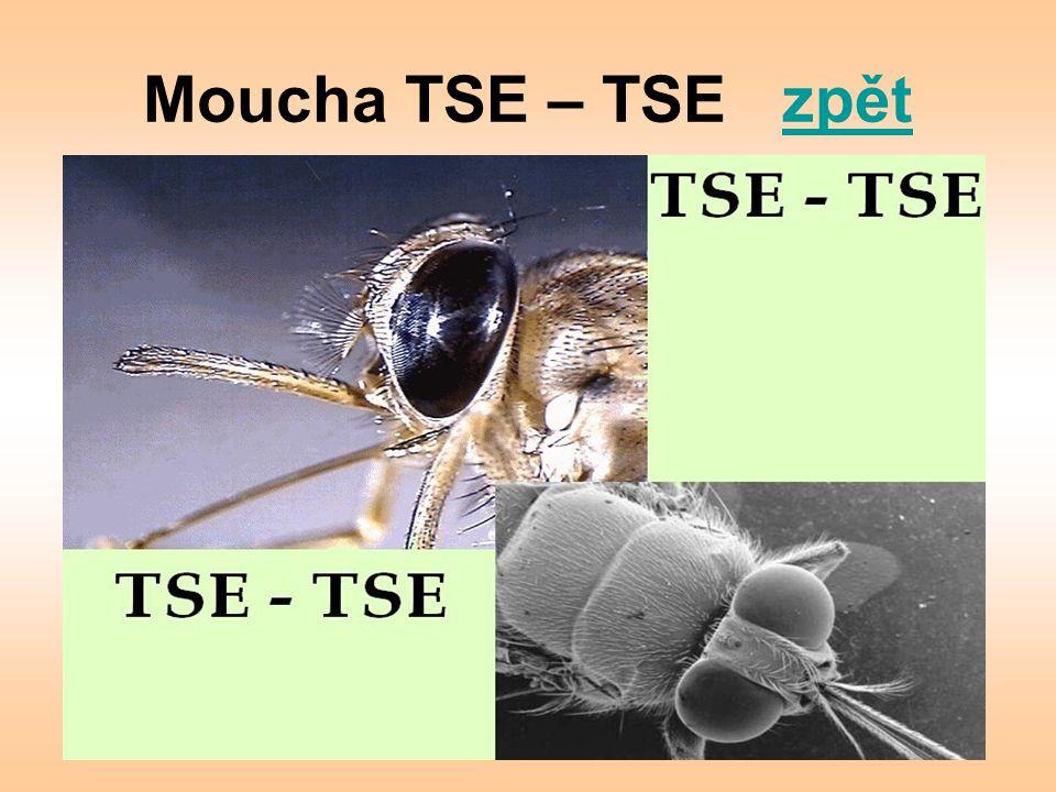 Moucha TSE – TSE zpět