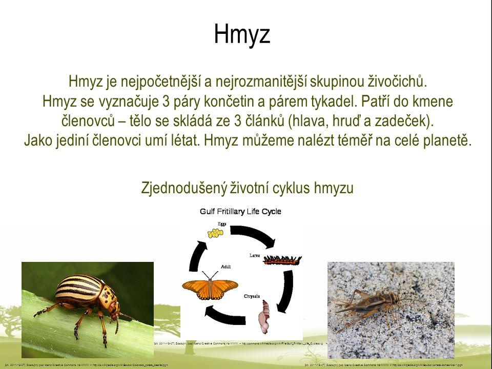 Zjednodušený životní cyklus hmyzu