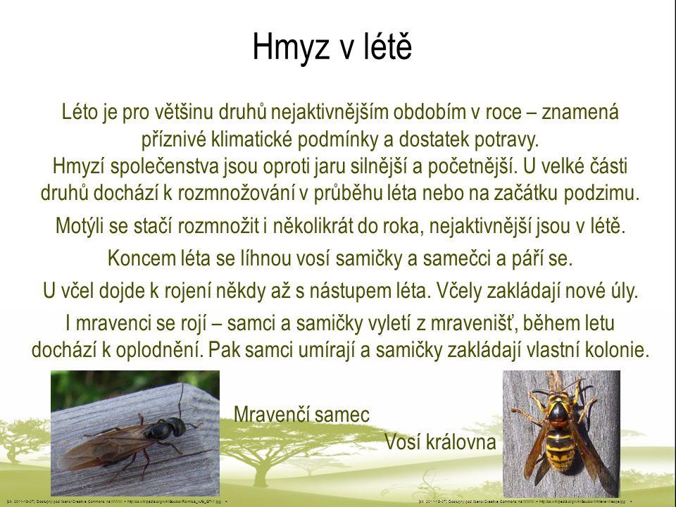 Koncem léta se líhnou vosí samičky a samečci a páří se.
