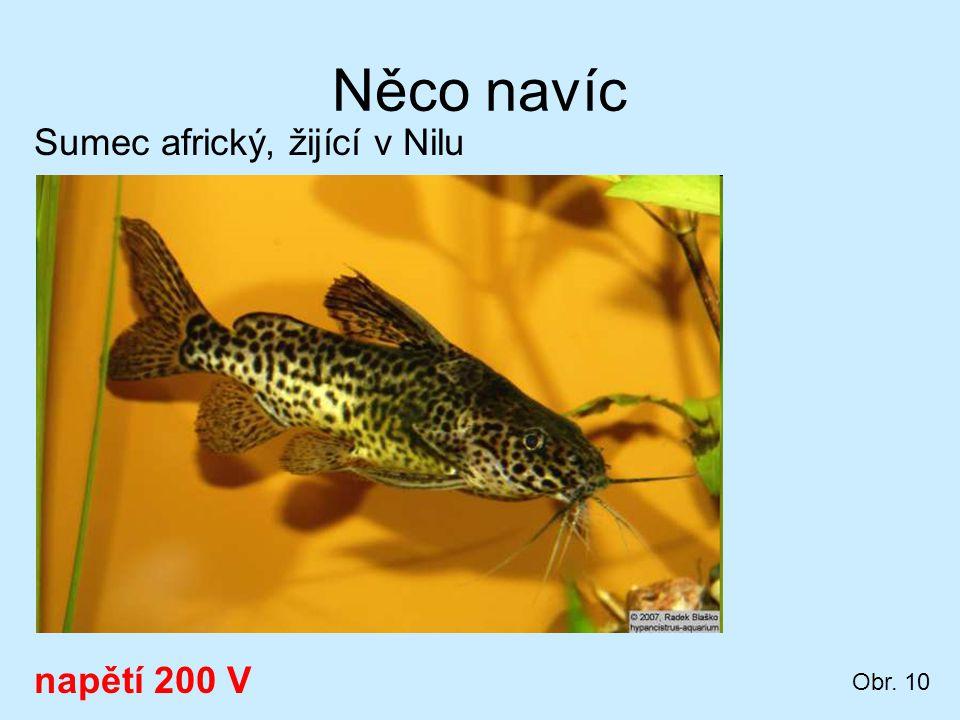 Něco navíc Sumec africký, žijící v Nilu napětí 200 V Obr. 10