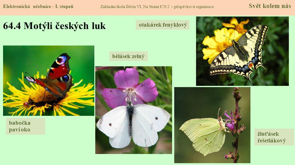 64.4 Motýli českých luk otakárek fenyklový bělásek zelný