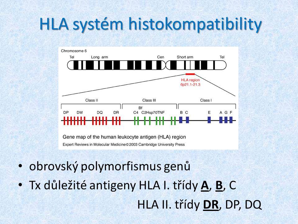 HLA systém histokompatibility