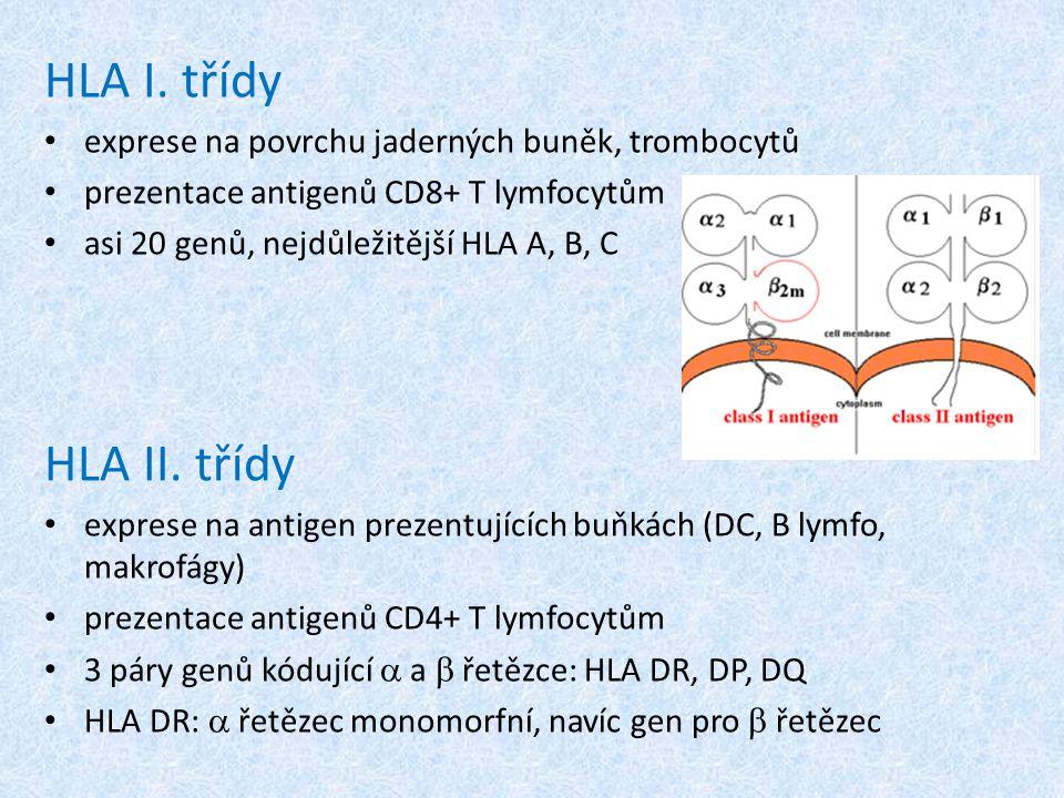 HLA I. třídy exprese na povrchu jaderných buněk, trombocytů. prezentace antigenů CD8+ T lymfocytům.